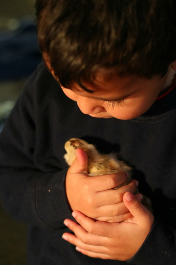 Mateo and baby chick